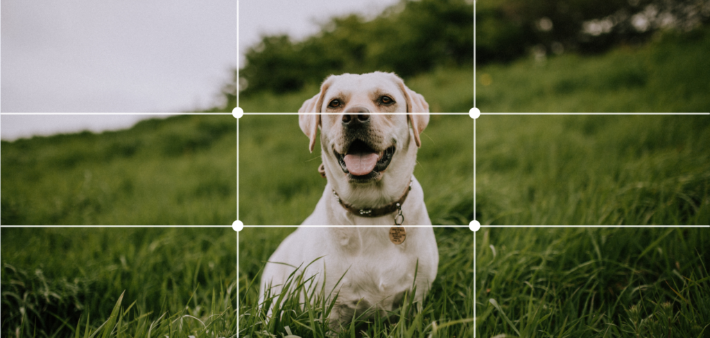 dog in the center of the image