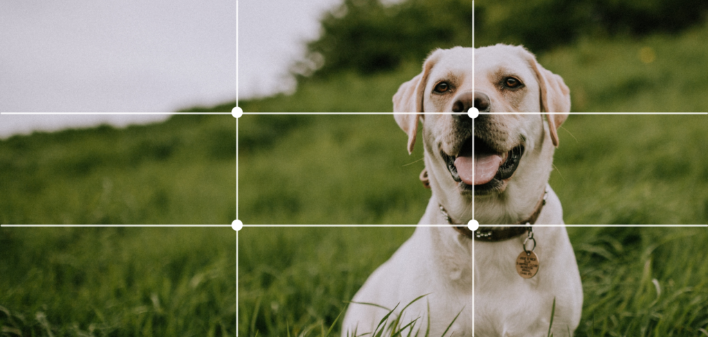 fix the image by aligning it with intersection points